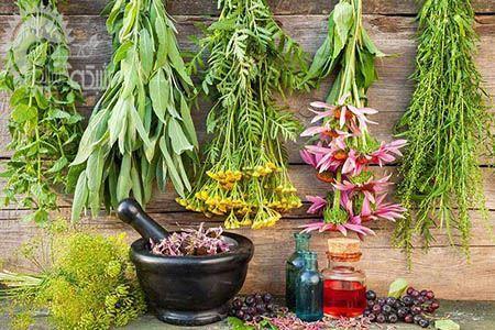 تصویر برای دسته بندی گیاهان دارویی