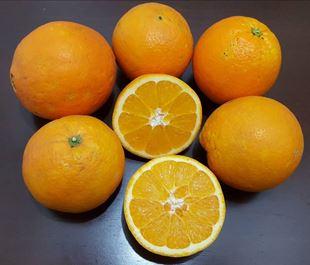پرتقال آبگیری